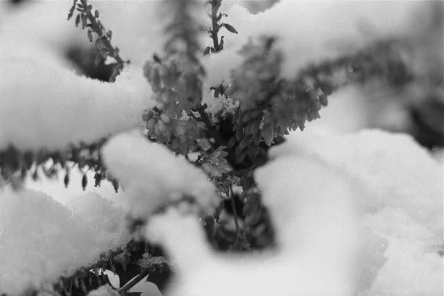 Snow12