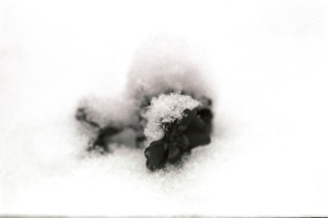 Snow36