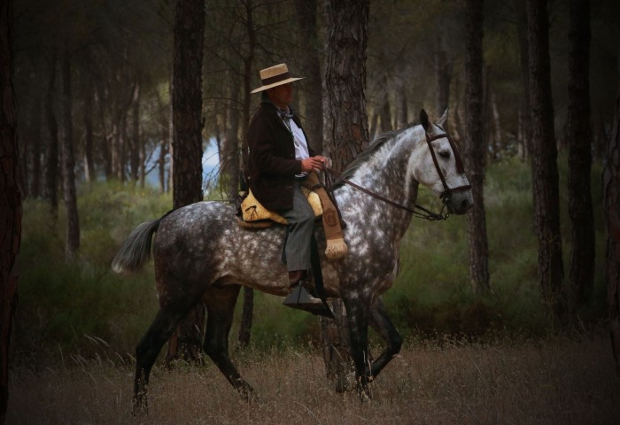 best horse 2